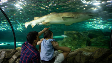Tourism operators are lobbying the NSW government to introduce holiday vouchers for accommodation and tourism experiences such as the SEA LIFE Sydney Aquarium.