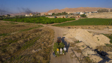 Palestinian farmers near the West Bank city of Jericho.
