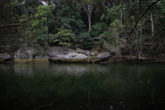 There are areas of pristine bushland along Wolli Creek.