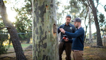 Steve Griffiths, with Nick Lyons from Treetec Arboriculture and Ecology, left, has carried out research which shows chainsaw hollows are more effective than nest boxes at protecting animals.