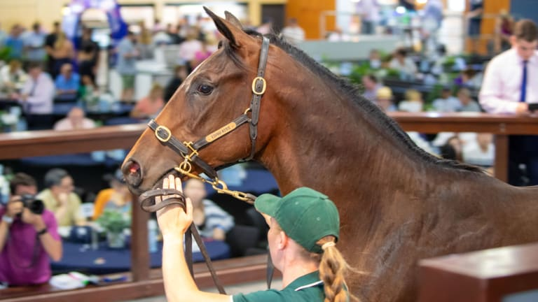 Big money: more than $50 million changed hands on day one of the Magic Millions sale.