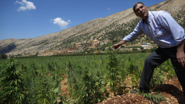 Mayez Shrief, 65, who has planted cannabis for decades checks his crop in the village of Yammoune.