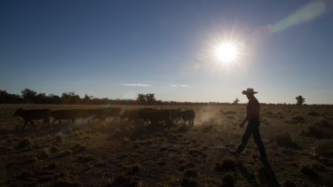 Farmers say national environment laws are too complicated and don't reflect the realities of farm life.