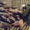 Chinese fishing fleet goes dark near Galapagos
