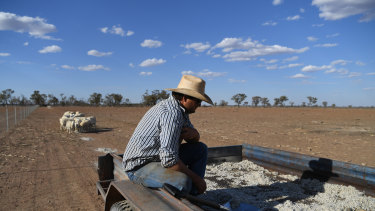 Grazier Scott Todd pauses after feeding so sheep cotton seed on his drought affected property near Bollon in south-west Queensland.