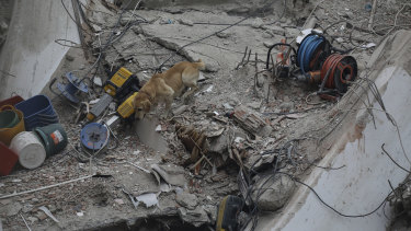 A rescue worker uses Pasha, a sniffer dog, in the search for survivors.