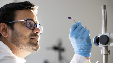 ANU PhD candidate Ankur Sharma examines a new biodegradeable, bendable organic semi-conductor, which aims to lead the way to bendable phones.
