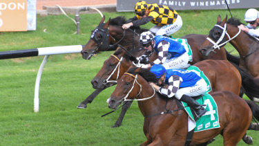 Same again please: Red Cardinal flies home to beat Big Duke in the Parramatta Cup.