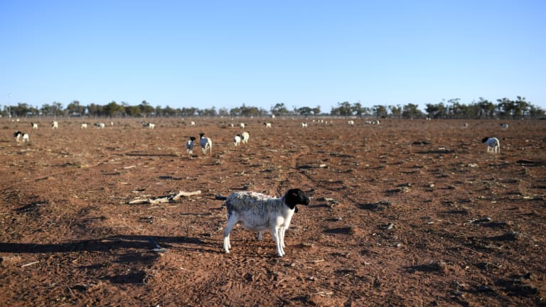 There's no early sign of a break in the drought - in fact it could get worse.