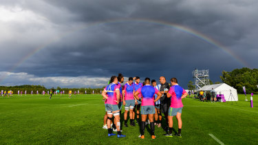 Pot of gold: Wallabies go about their business ahead of Saturday's big game.