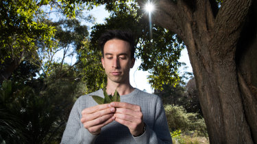 Worimi man Joshua Brown, the Aboriginal Programs coordinator at the Royal Botanic Garden, with lemon myrtle leaves.