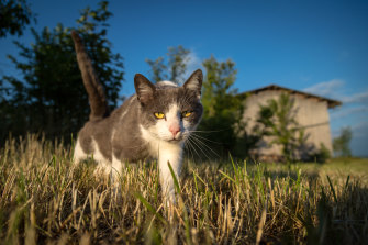 A few pets have been infected with the virus that causes COVID-19, mostly after the animals were in close contact with infected humans.