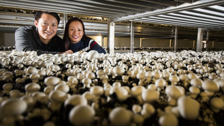 Majestic Mushroom owners, Ian and Helen Chu, have recently returned from a business trip to Singapore, potentially opening up the south-east Asian market to their business.
