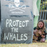 Australia must lead fight to save whales