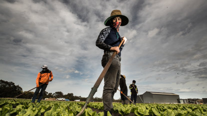 Destroying spinach and sacrificing cabbages: The worker drought wasting Australia's produce