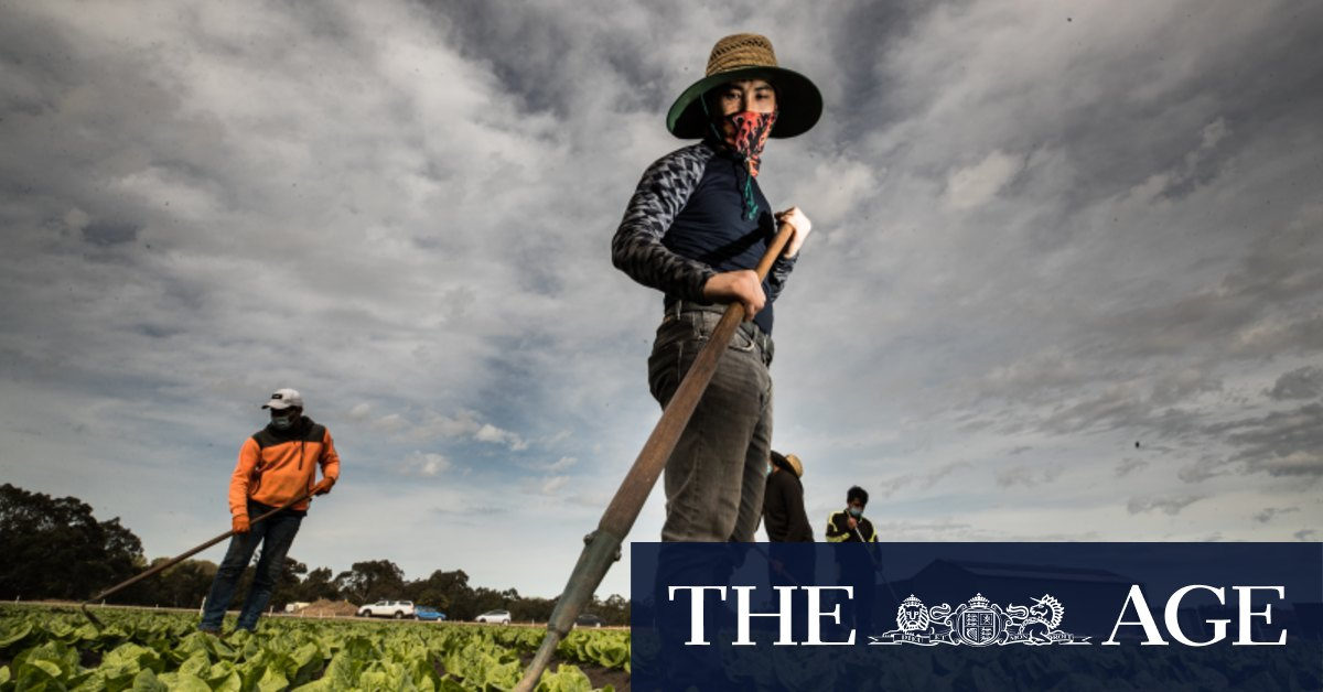 The worker drought wasting Australia's produce