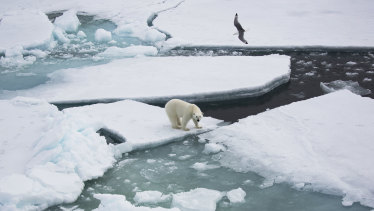 Cracking up: The melting of the Arctic sea ice has major implications for creatures such as polar bears.
