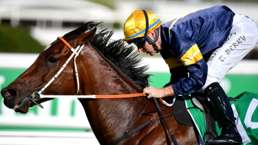 Masked Crusader is the one punters want in Saturday's Scone Guineas but he will face stiff competition from a blue-ribbon field at Rosehill.