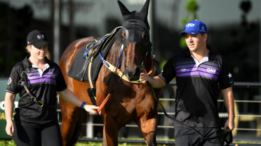 'If anything, she looks better than we have had her at the stage before': Winx in the mounting yard at Rosehill.