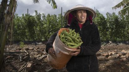 Why western Sydney hopes to see an urban farming boom