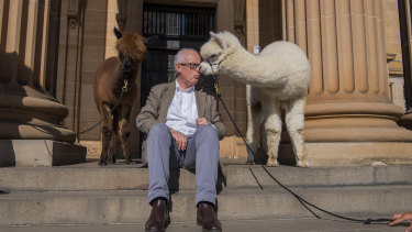 NSW's State Librarian John Vallance gets smooched by an alpaca before a million children listened -at the same time - to Matt Cosgrove's Alpacas with Maracas.