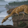 Unusual dinosaur species fossil discovered in Australia for first time