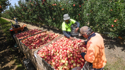 Nationals MPs endorse amnesty for illegal migrant farm workers