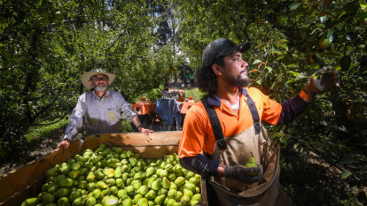New deal secures more Pacific Islander farmworkers for Victoria