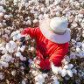 Fashion brands urged to ban Uighur-picked cotton