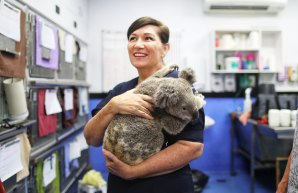 Environment Minister Leeanne Enoch said the Queensland Government will examine a business case for a new wildlife hospital for the RSPCA. It has extended funding for 2020-21.