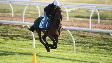 Marmelo was runner-up in last year's Melbourne Cup.