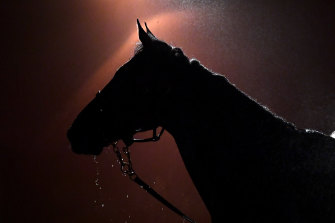 The Caulfield Cup prizemoney is set to be trimmed this year.