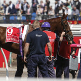 Red Cadeaux at the 2015 Emirates Melbourne Cup.