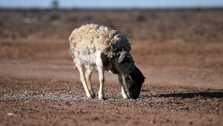 Prime Minister Scott Morrison says national drought action is a top priority, and critics say climate action should be a key part of the response.