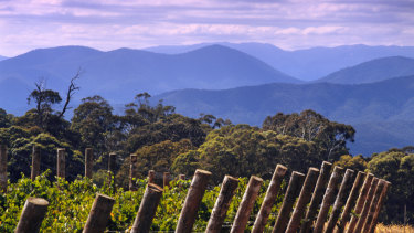 Brown Family Wine Group's Whitlands Vineyard in Victoria's Great Dividing Range.