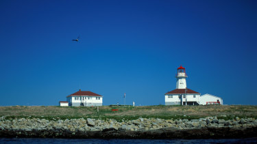 Machias Seal Island is home to a Lighthouse and hundreds of Atlantic puffins.