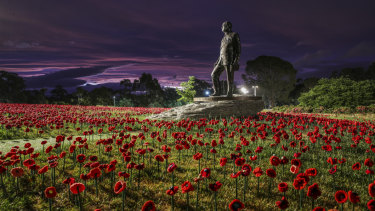 Twlight at the Australian War Memorial installation of 62,000 poppies to mark lives lost in World War 1.