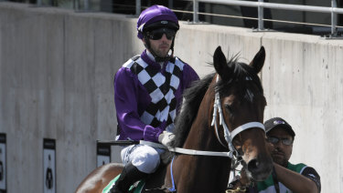 Up in trip: Chris Waller's Zalatte steps up to 1400m at Rosehill today.