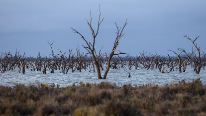 Murray Darling Basin water recovery to be halted by Nationals senators