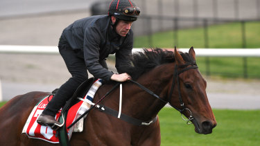 Mr Quickie drew barrier 10 in the Caulfield Cup.