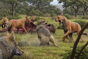 An artist's impression of a dire wolf attacking a grey wolf.