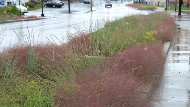 An urban rain garden in Lancaster, US, designed by Phyto Studio.