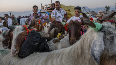 Goats huddle together as they are brought for sale at a market ahead of Eid al-Adha festival in Indian-controlled Kashmir