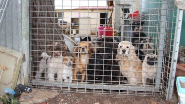 Authorities have raided two puppy farms in regional NSW.