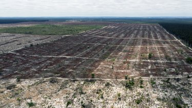 Gnangara mound pine plantations across the cities of Wanneroo and Swan are mostly cleared.