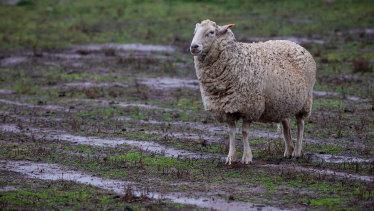 Rain on the plain: Much needed rain fell on Bathurst on Friday.