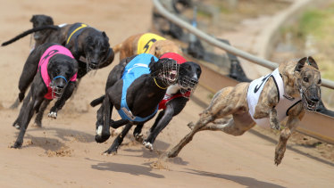 Greyhound owners and trainers will be given 16 years to meet new kennelling standards.