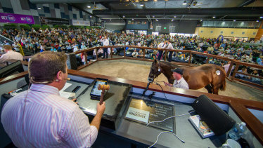 The Gold Coast Magic Millions yearling sales brought in a record haul over the weekend.
