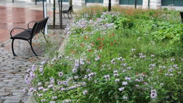 An urban wildlife garden in Baltimore, US, designed by Phyto Studio.