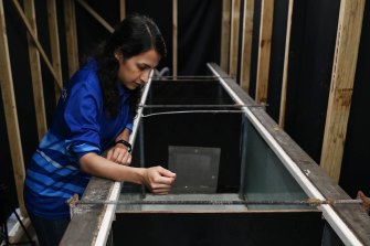 Maryam Farzadkhoo, a UNSW PhD candidate, who has been developing the methods to draw the fish towards the tube fishway.